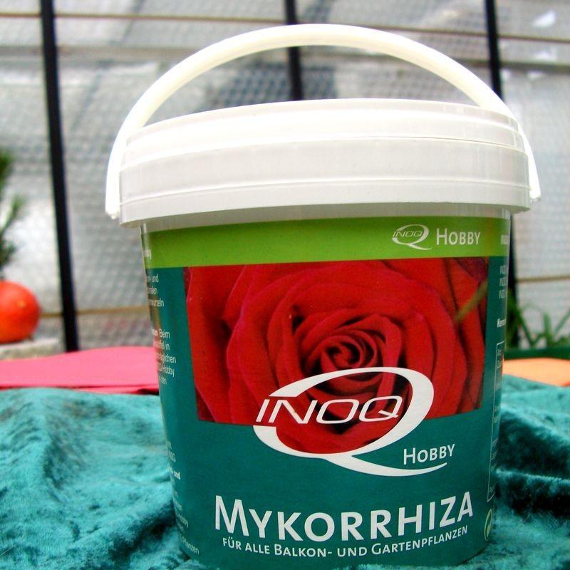 Mycorrhiza Pilzsporen