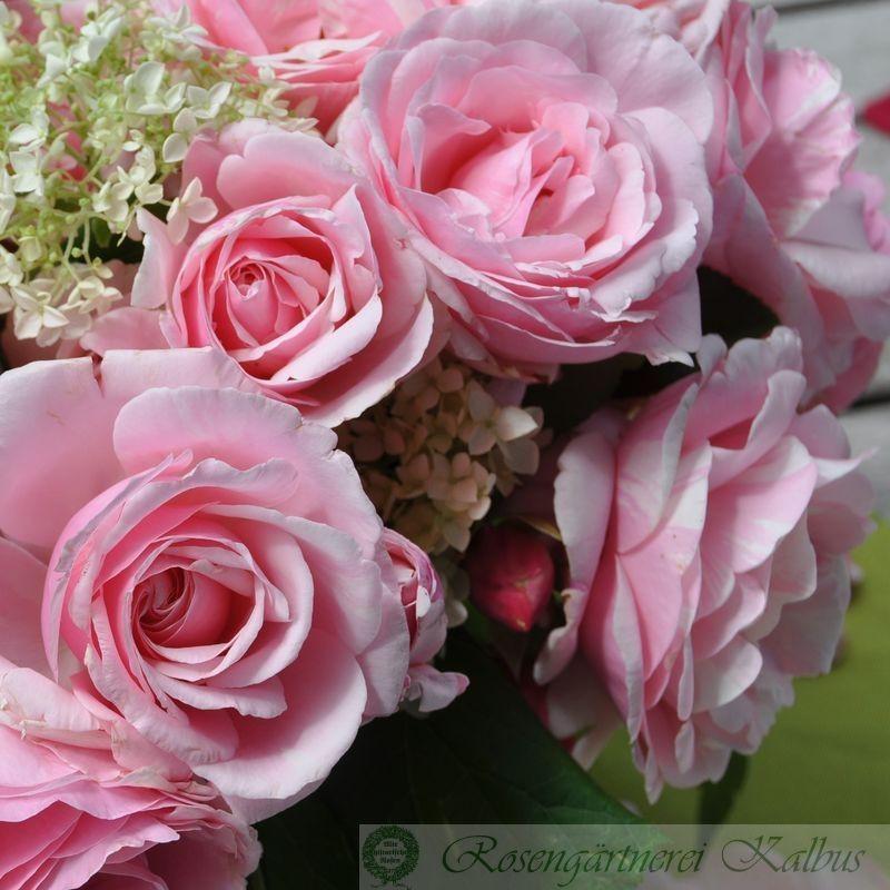 Besondere Rose Billet Doux®