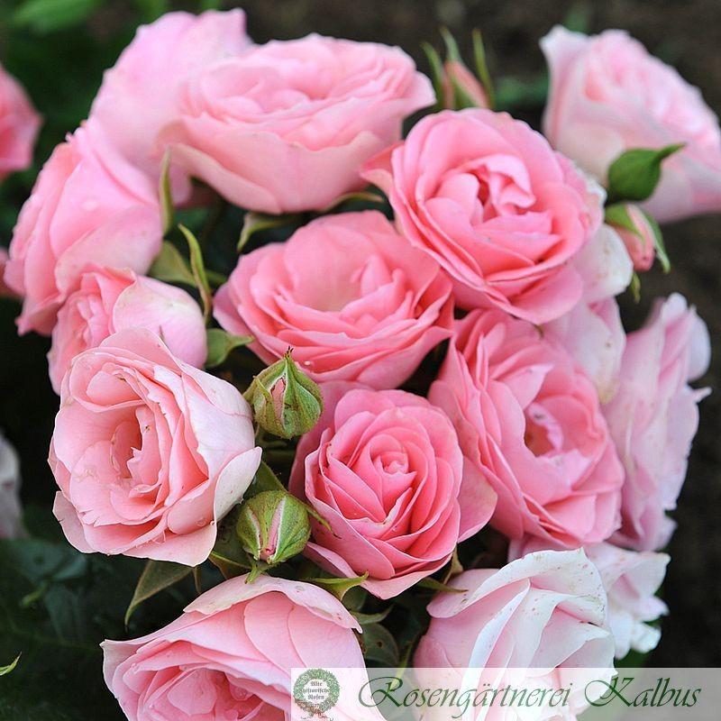 Besondere Rose Bouquet de Marièe®