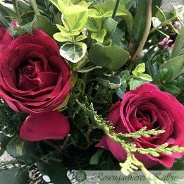 Besondere Rose Harald Wohlfahrt®