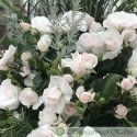 Apsprin Rose