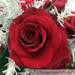 Moderne Rose Lübecker Rotspon®